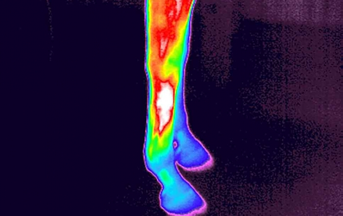 koerpertemperatur-pferd-beine