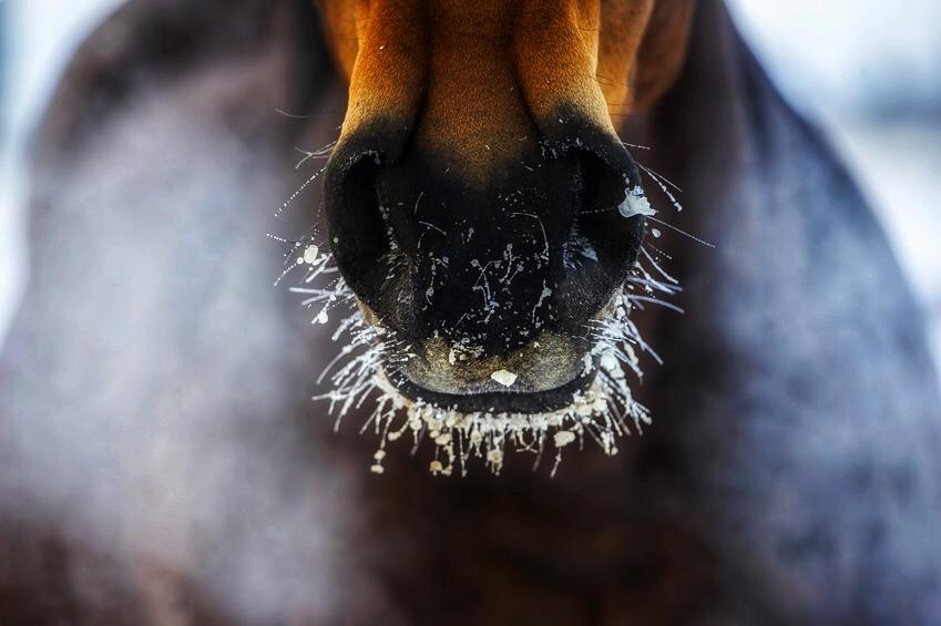 Pferd Aufwärmphase