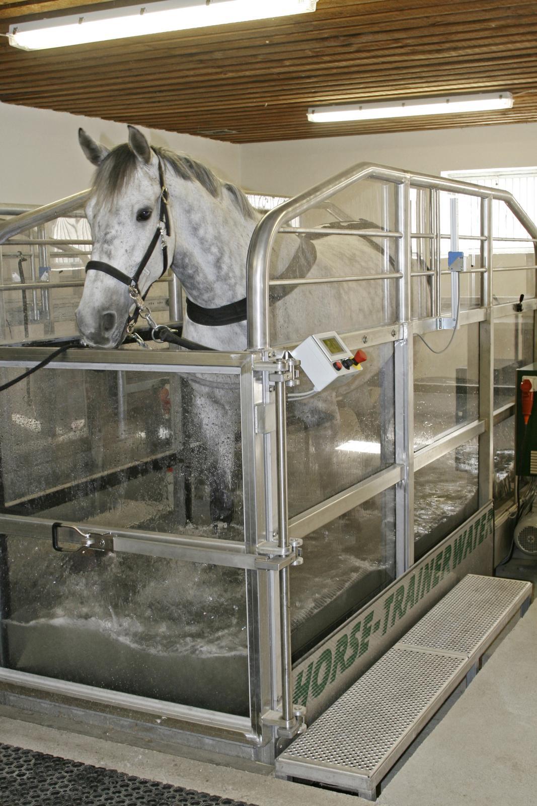 Pferd im Aquatrainer
