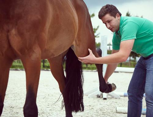 Pferde-Reha Bayern: Pferdephysiotherapie